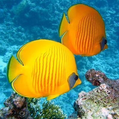 peces en acuario qué comen?