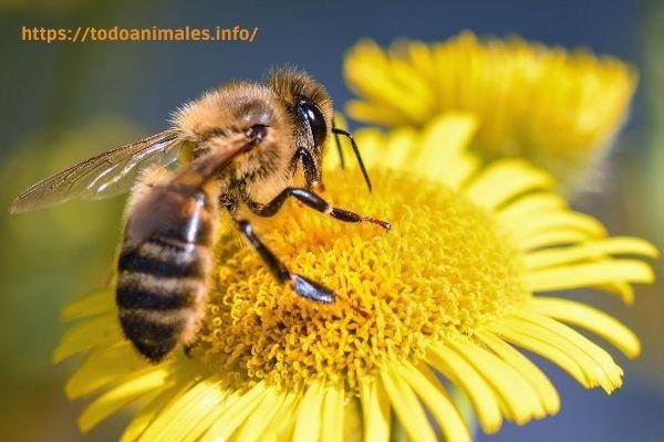 Las colonias de abeja,  son ejemplos claros donde las hembras mandan.