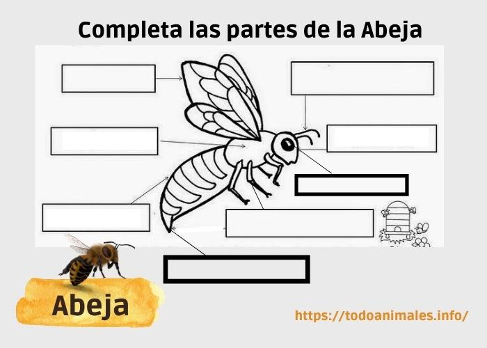 Hoja de trabajo para niños, partes de la abeja para completar. Descarga gratuita