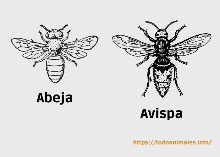 Abeja y Avispa, diferentes morfologías de cada especie
