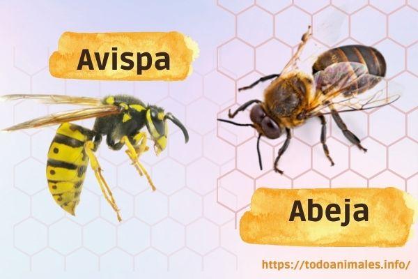 Diferencias entre Abeja y Avispa