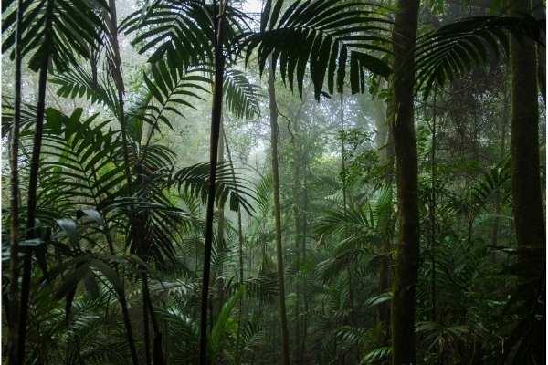 Bioma del bosque tropical