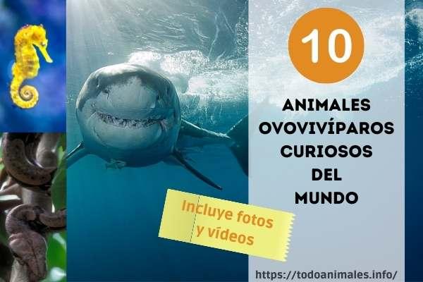 Animales Ovovivíparos - 10 ejemplos, fotos, vídeos y curiosidades