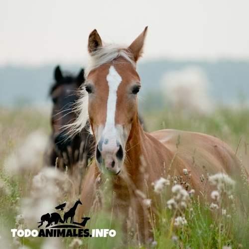 nombre para caballos