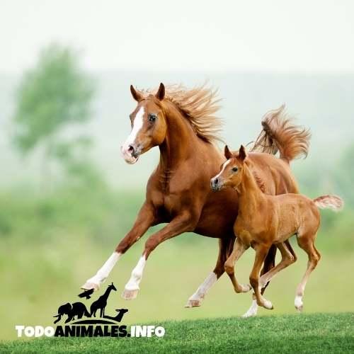 Elegir el nombre para un caballo