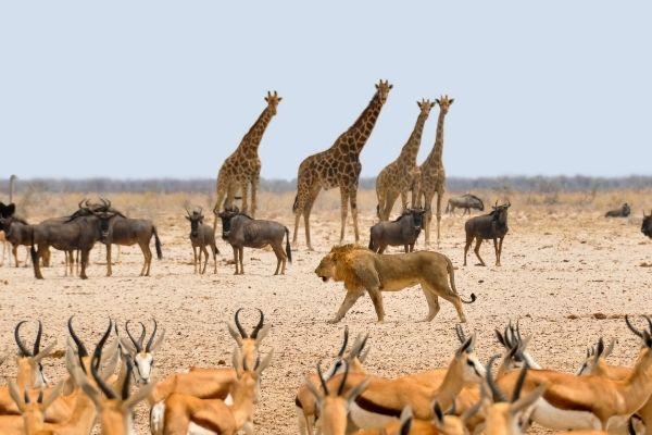 Biodiversidad. Animales de diferentes especies conviven en la sabana africana, cada uno forma parte de una cadena de alimentación donde todos son elementos esenciales y sin el otro no podrían subsistir.