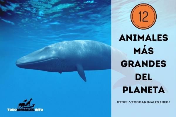 Los 12 animales más grandes del planeta