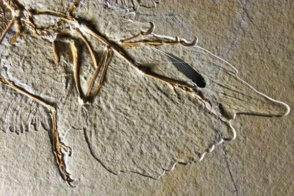 Archaeopteryx, fotos y nombres de dinosaurios voladores