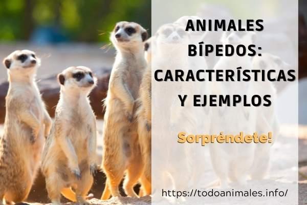 Animales Bípedos: Características y ejemplos