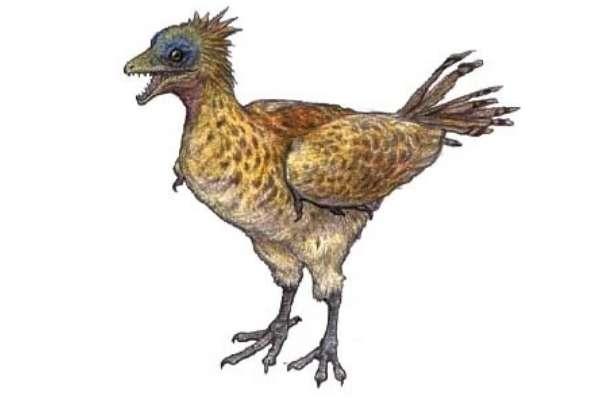 iberomesornis
