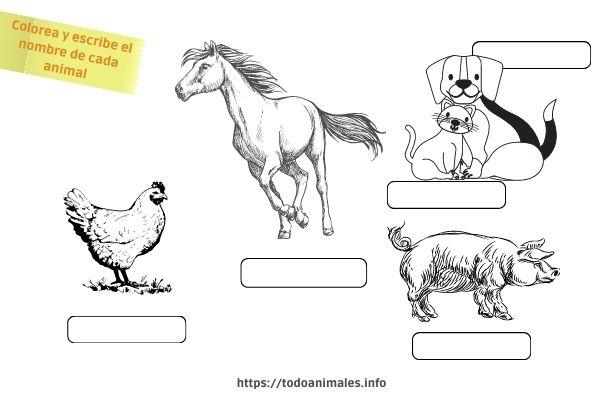 Actividad sobre los animales que trajo el europeo a América luego de la conquista - Para imprimir y colorear o pintar