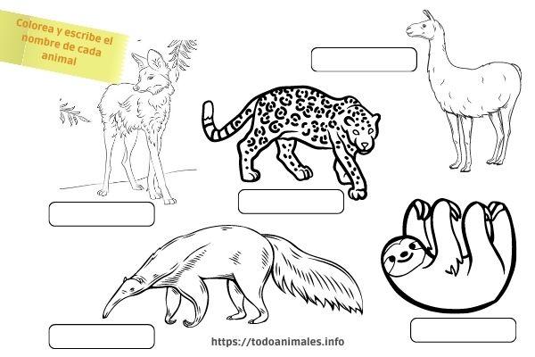 Actividad sobre los animales originarios América
