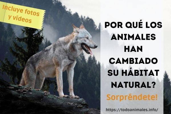 Por qué los animales han cambiado su hábitat natural?