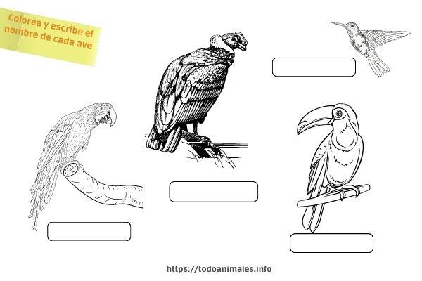 Aves Originaria de América