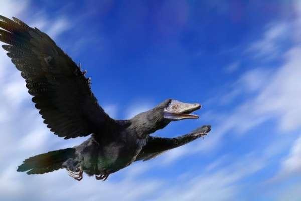 Fotos y nombres de dinosaurios voladores