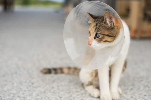 Esterilización de gatos: entérate cuándo, cómo y por qué