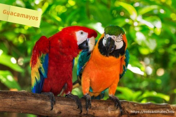Guacamayos, hermosas aves tropicales de América